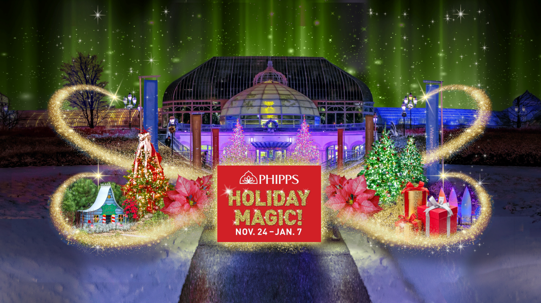 its that time of year again and the phipps conservatory botanical gardens winter flower show and light gardens holiday magic is running from november