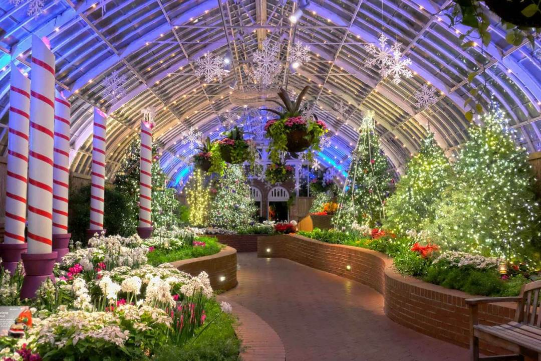 Phipps Conservatory Winter Flower Show and Light Garden