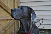 Clyde Pittsburgh dane rescue (14)