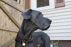 Clyde Pittsburgh dane rescue (31)