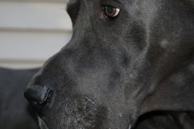 Clyde Pittsburgh dane rescue (32)