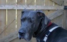 Clyde Pittsburgh dane rescue (9)