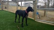Oreo PA Dane rescue (3)