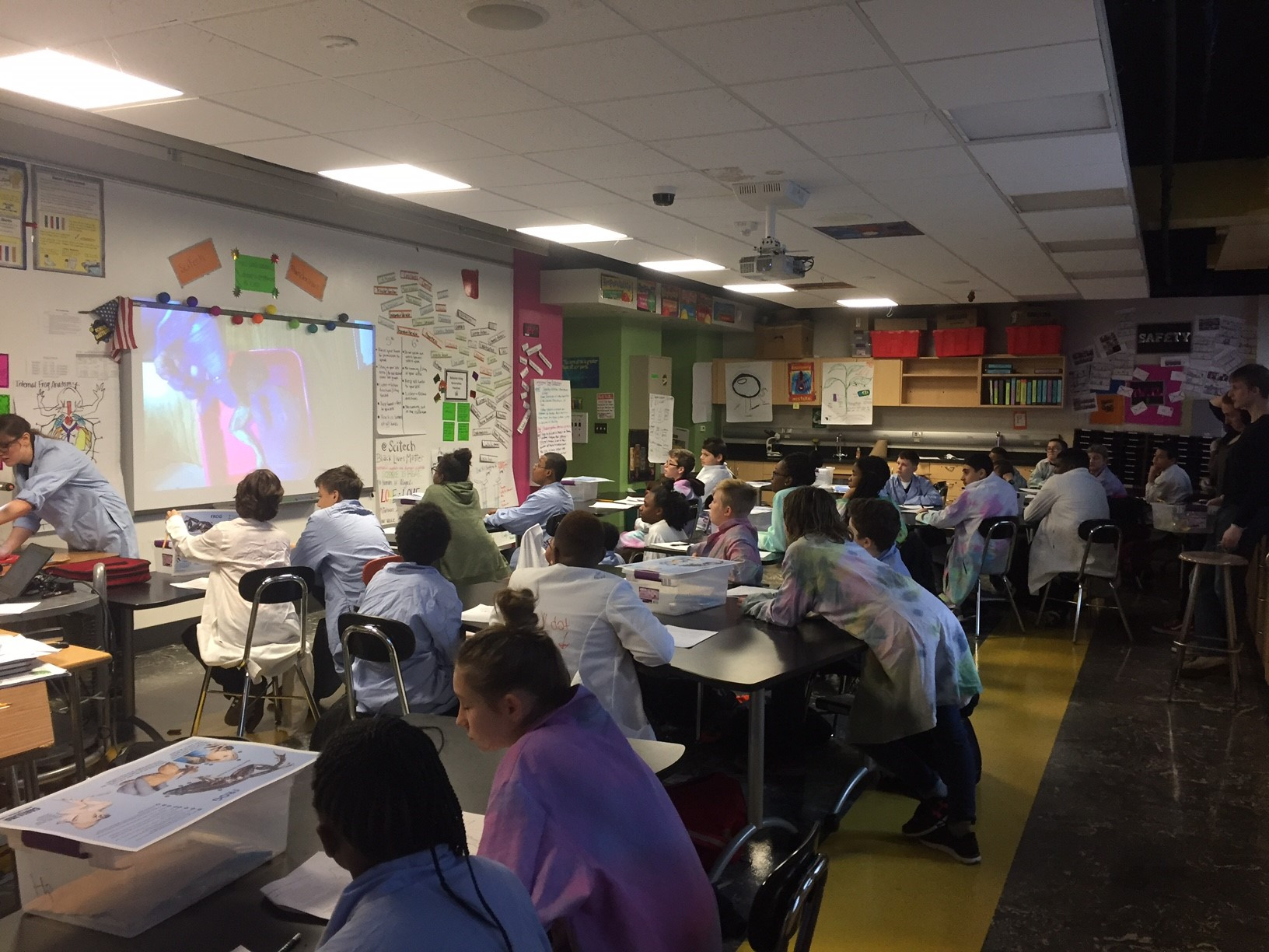 7th Grade Frog Dissection Lab