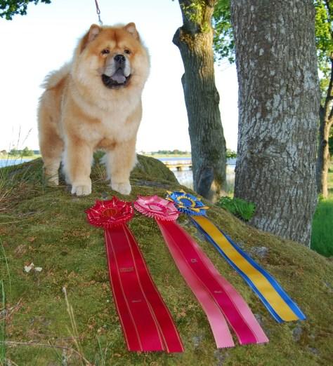 Piuk Chow Plenty Of Summer Success-Vanersborg 2013