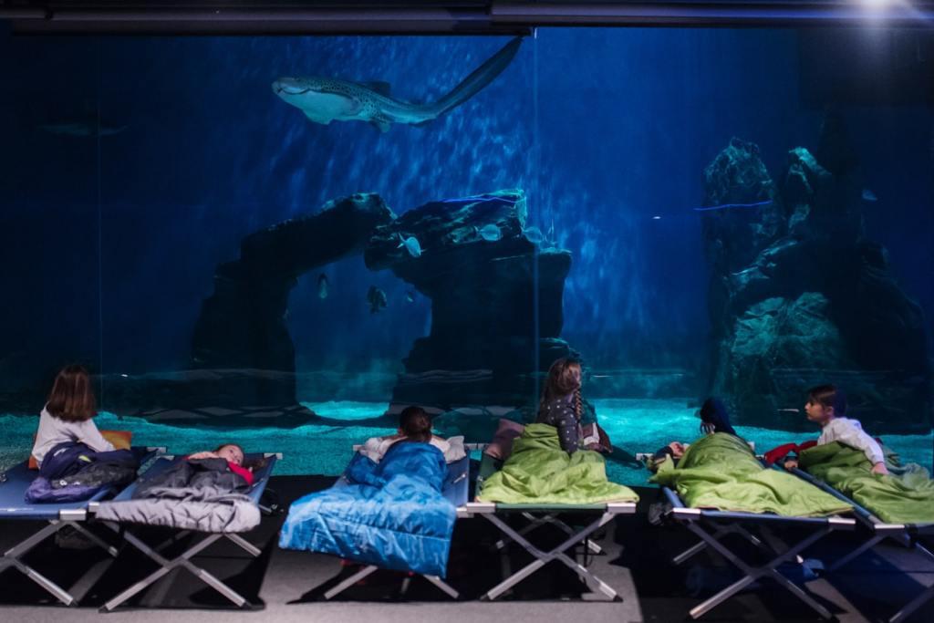 acquario di genova notte con gli squali