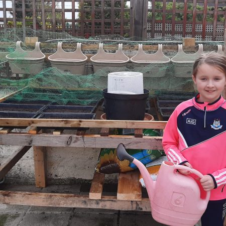 """Eva Marie 4th Mr Walshe """"I helped make a seed table and planted lettuce and tomatoes"""""""