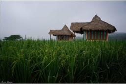 25平方米1臥室平房 (清道) - 有1間私人浴室 Baan Porhdoi Goidao