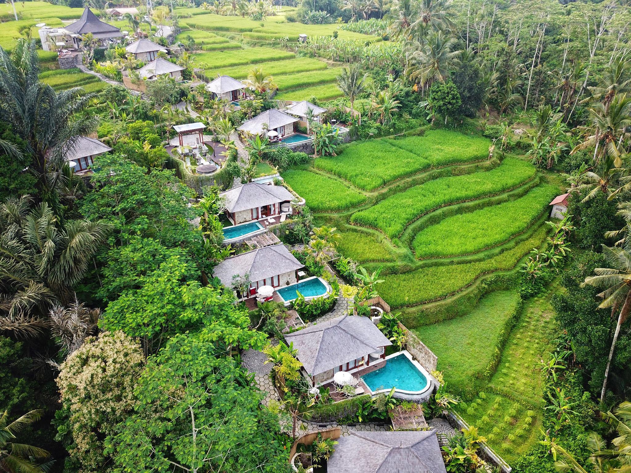 swing chair ubud bean bag covers target nau villa in bali - room deals, photos & reviews