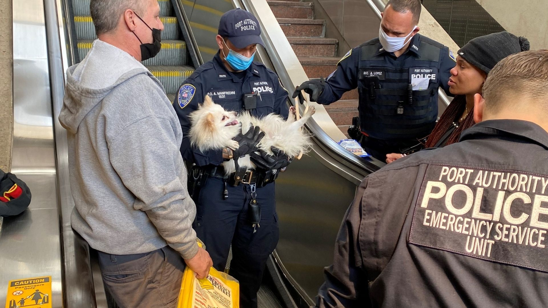Dog rescued PATH