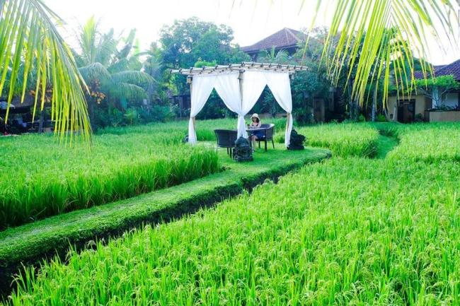 Bebek Tepi Sawah Villa And Spa