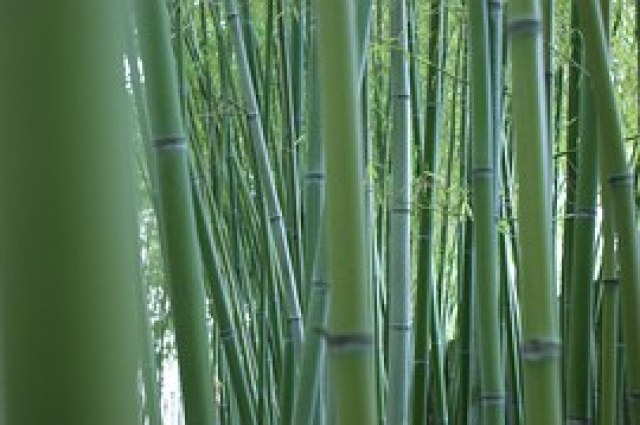 Bamboo, Stalks, Bamboo Forest