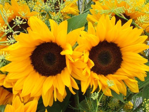 Sunflower, Summer Flowers, Flowers, Yellow, Bright