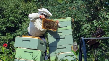 Beekeeper, Bees, Insect, Beehive, Nature, Honey, Combs