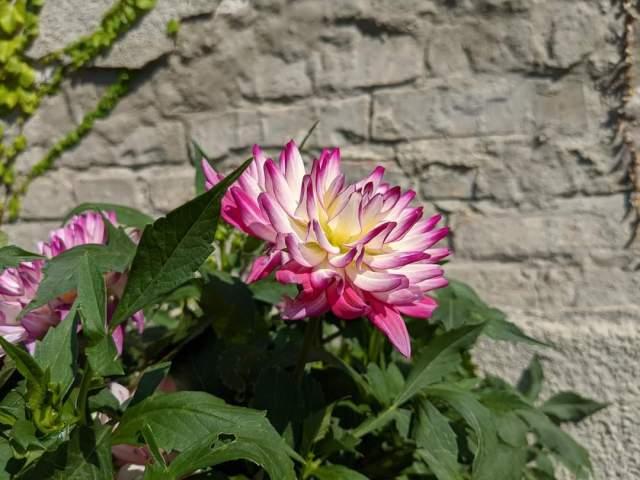 Lotus Love story
