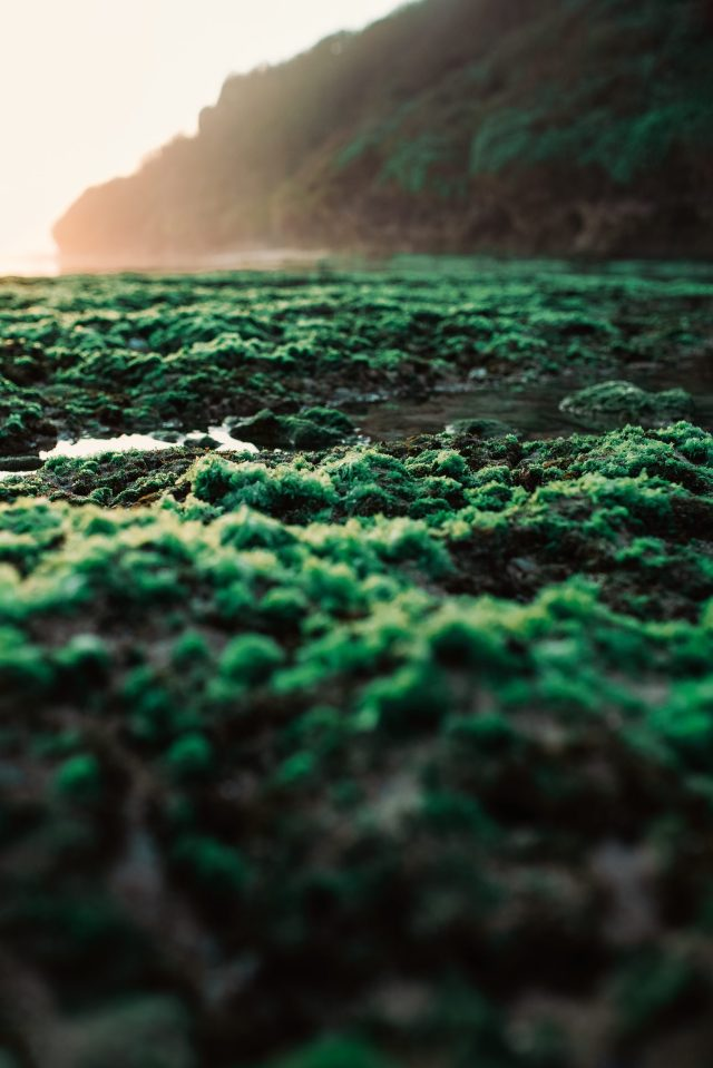Moss on a coastal area