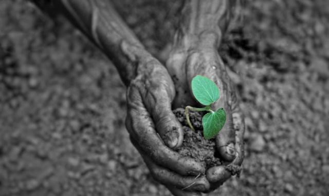 Seedlings in the Hands