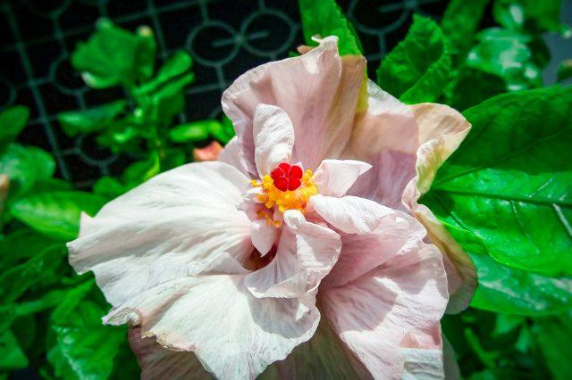 A fade up flower