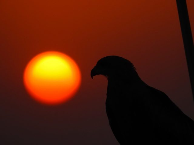 Bird and a Sunset Scenery on Focus