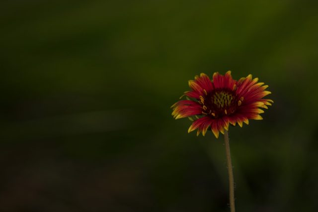 Blooming Colorful Flower