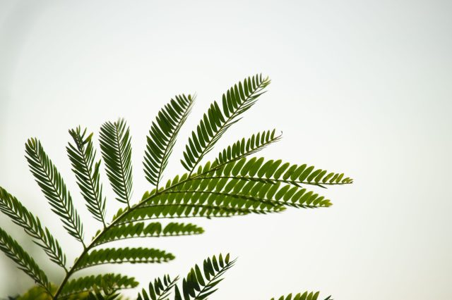 Fern structure of a branch