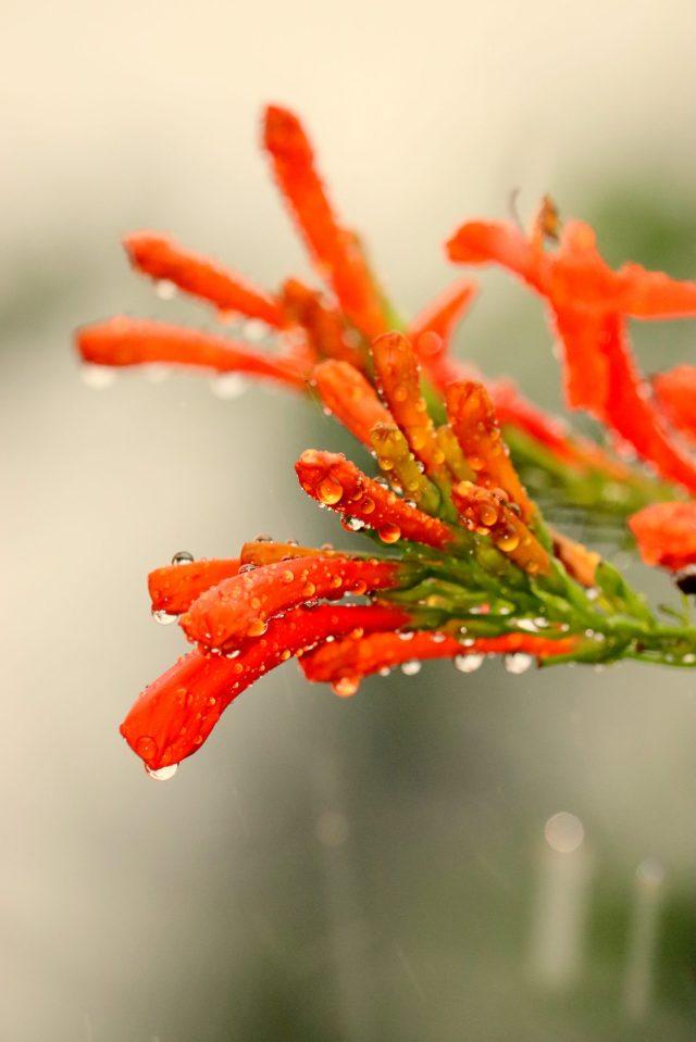 Orange Flower with Droplets