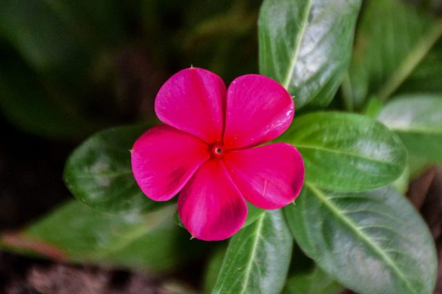 Pink flower on a plant