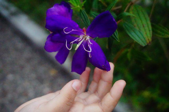 Shining Purple Flower