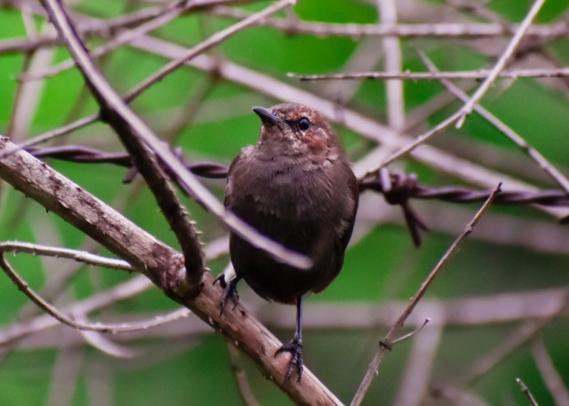 Sparrow sitting on tree branch