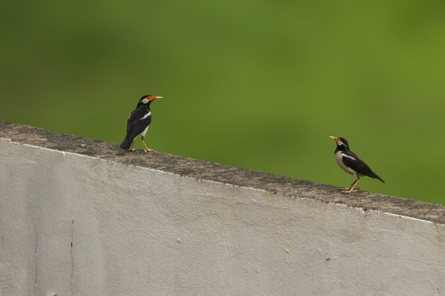 Two birds on a boundary wall