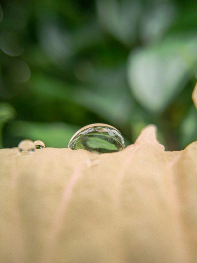 Water Drop on Leaf on Focus