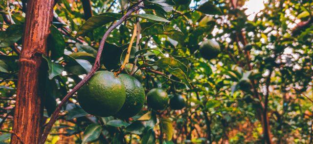 Fresh and organic fruit