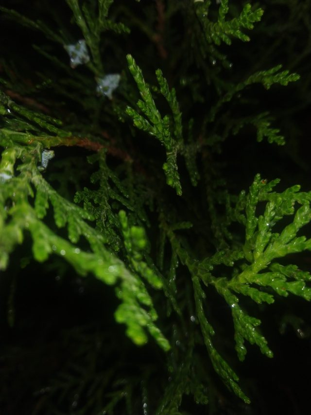 the green leaves