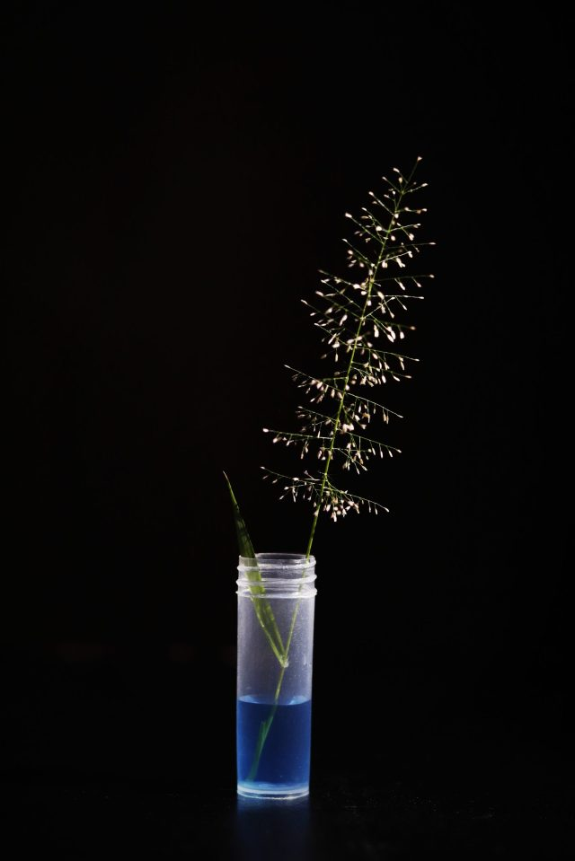 A grass straw in a flask