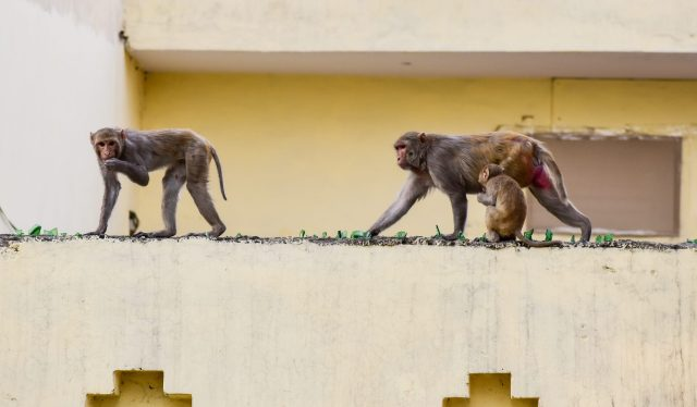 three monkeys sitting on the wall