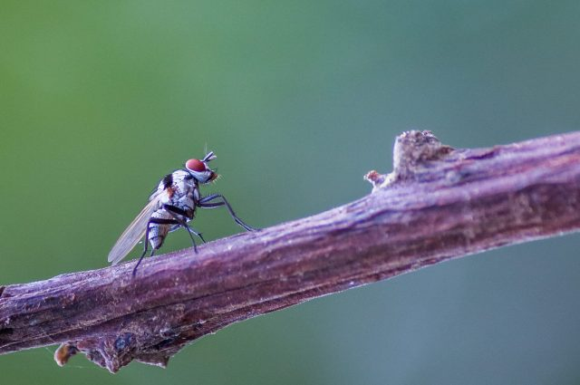 insect on a branch
