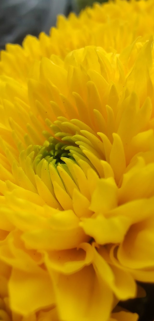 Blooming Yellow Flower
