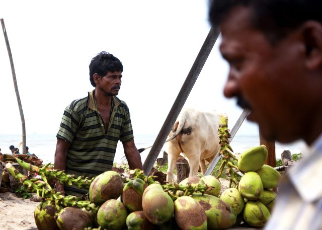 Man selling coconuts