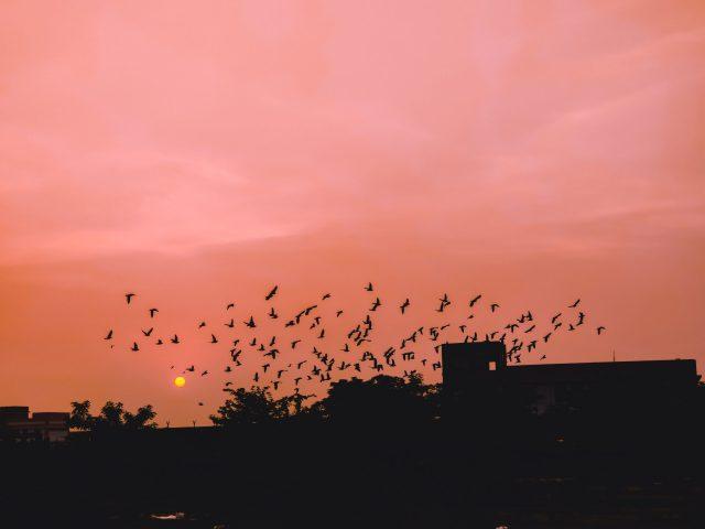 Birds in sky