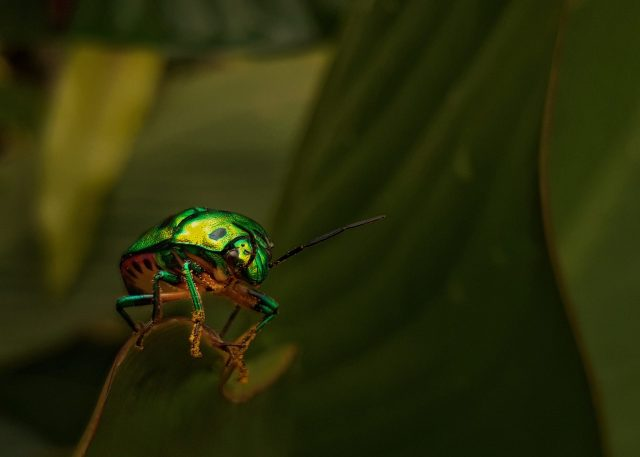An insect climbing a plant