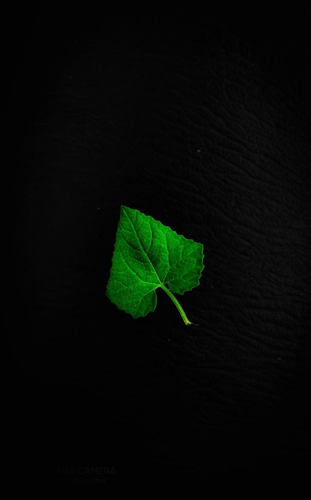 Leaf with black background