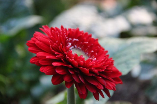Red Blooming Flower