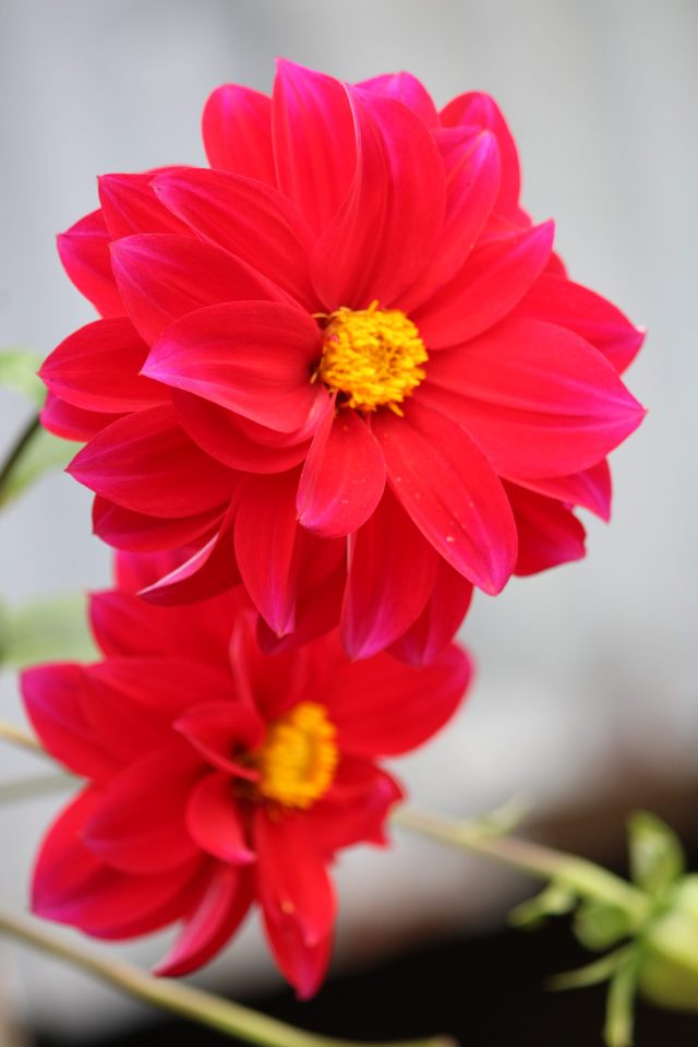Red flowers on a plant