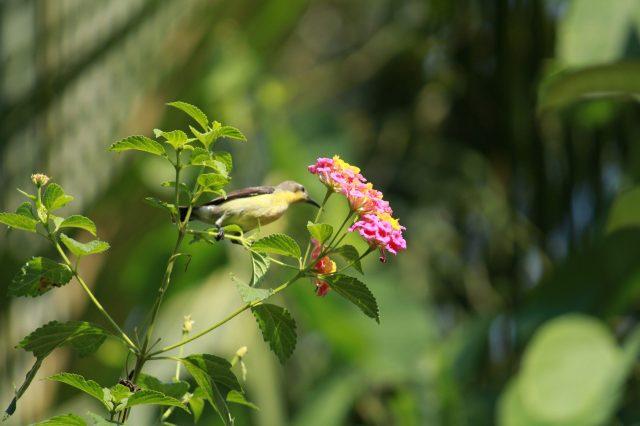A bird on a plant