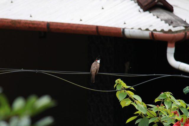 bird on an electric line