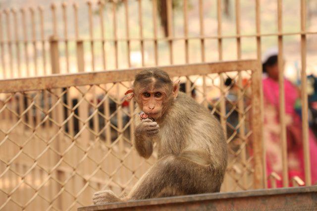 a monkey sitting