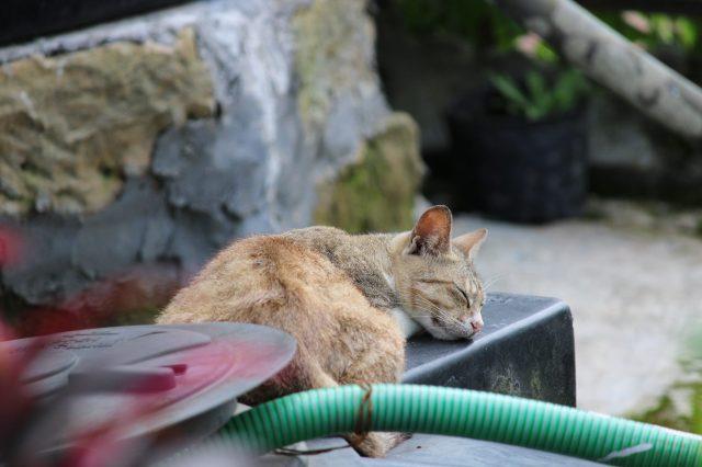A sleeping cat