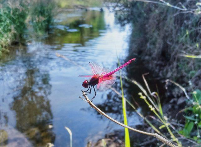 A dragonfly on a twig