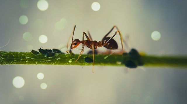 Big ant on a branch