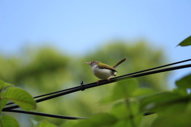 bird on an electric line